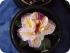 Цветок из мыла в Таиланде