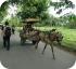 Конная повозка на Бали