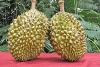 Дуриан - король тайских фруктов