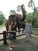Туристы общаются со слоном на Бали