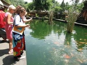 Рыбы в водоеме на Бали
