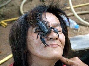 Опасные гады Таиланда - скорпион
