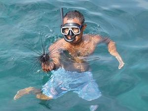 Морский еж в Тайланде